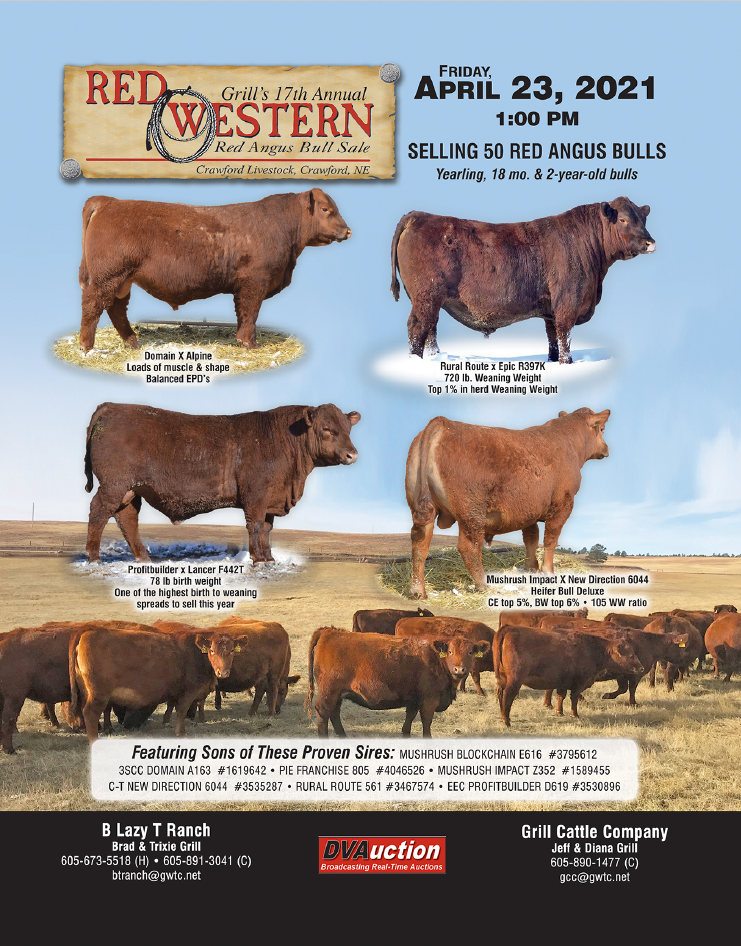 Grill's 2021 Red Western Bull Sale