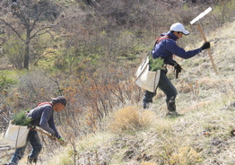 10,000 Ponderosa Pine Seedlings Planted Monday On East Side Of CSC Campus