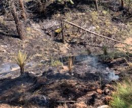 Last Of Area Wildfires Controlled, But Dry Weather Continues