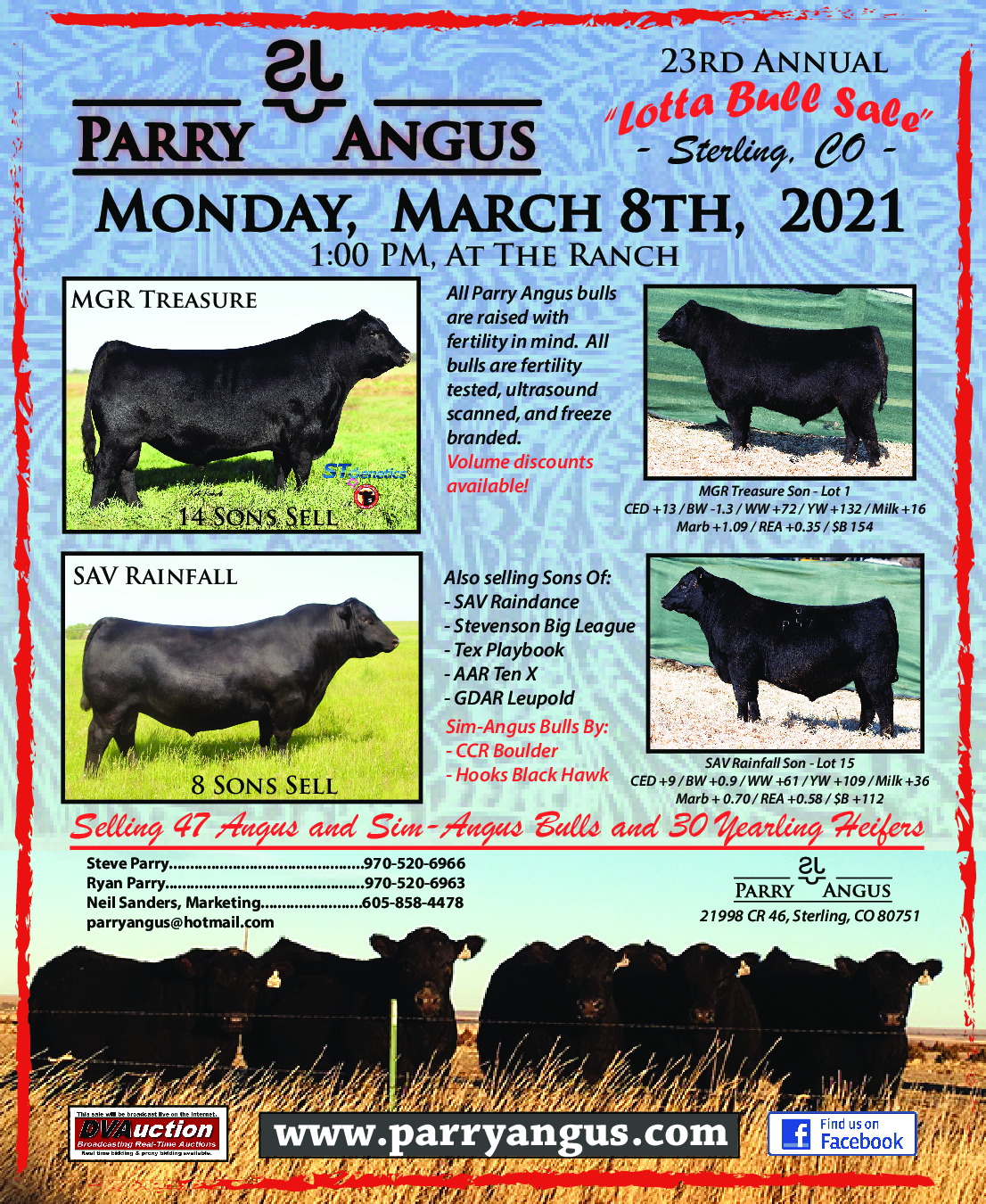 Parry Angus Bull Sale